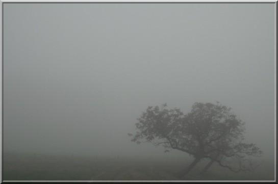 Brouillard_Nothing_Hill