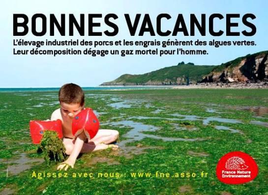 Algues_Bretagne